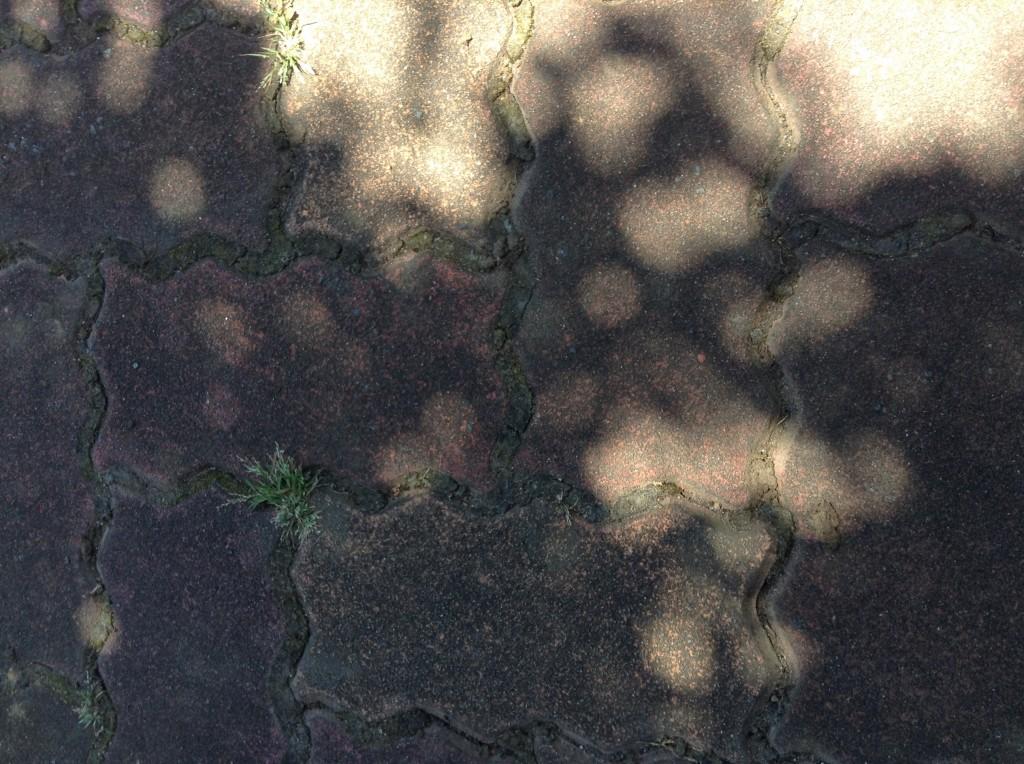 葉と葉の隙間にある光は、真ん丸いものが多い!